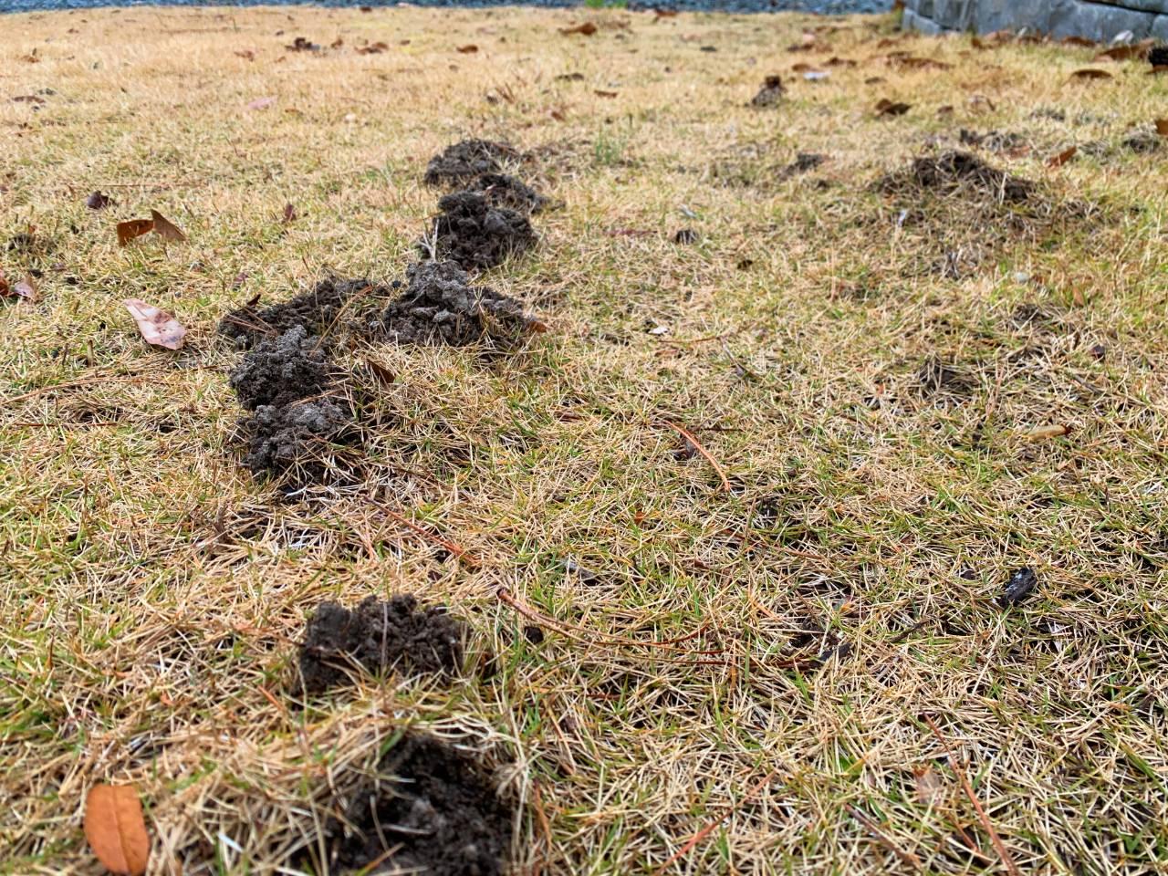 mole yard damage