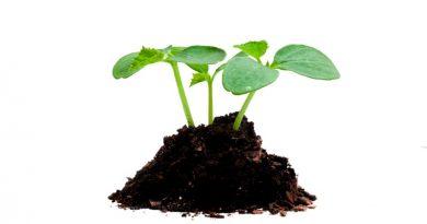 best-soil-for-growing-seedlings