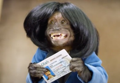 can-a-monkey-steal-your-identity