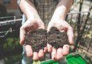 hands-holding-good-soil