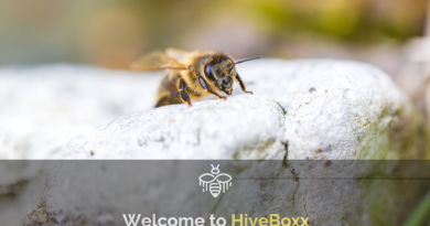 hive-boxx-save-the-honey-bee-preview