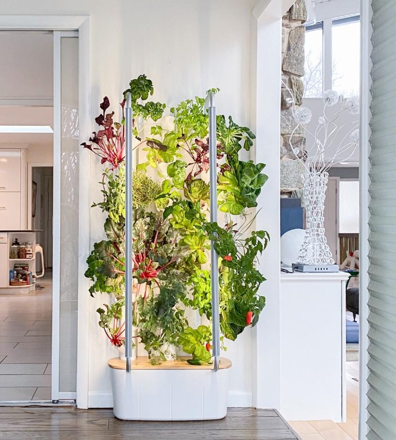 gardyn-fresh-produce-growing-in-kitchen