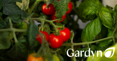 gardyn-indoor-produce-and-flower-growing-tomatoes